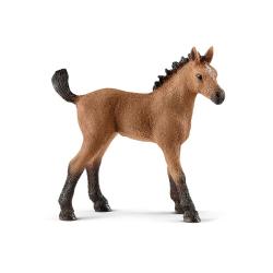 HORSE CLUB - QUARTER HORSE FOAL (5)
